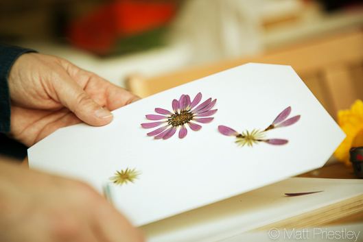photographs of hand made greeting cards and illustrations by Bowdon designer Wendy Lee-5